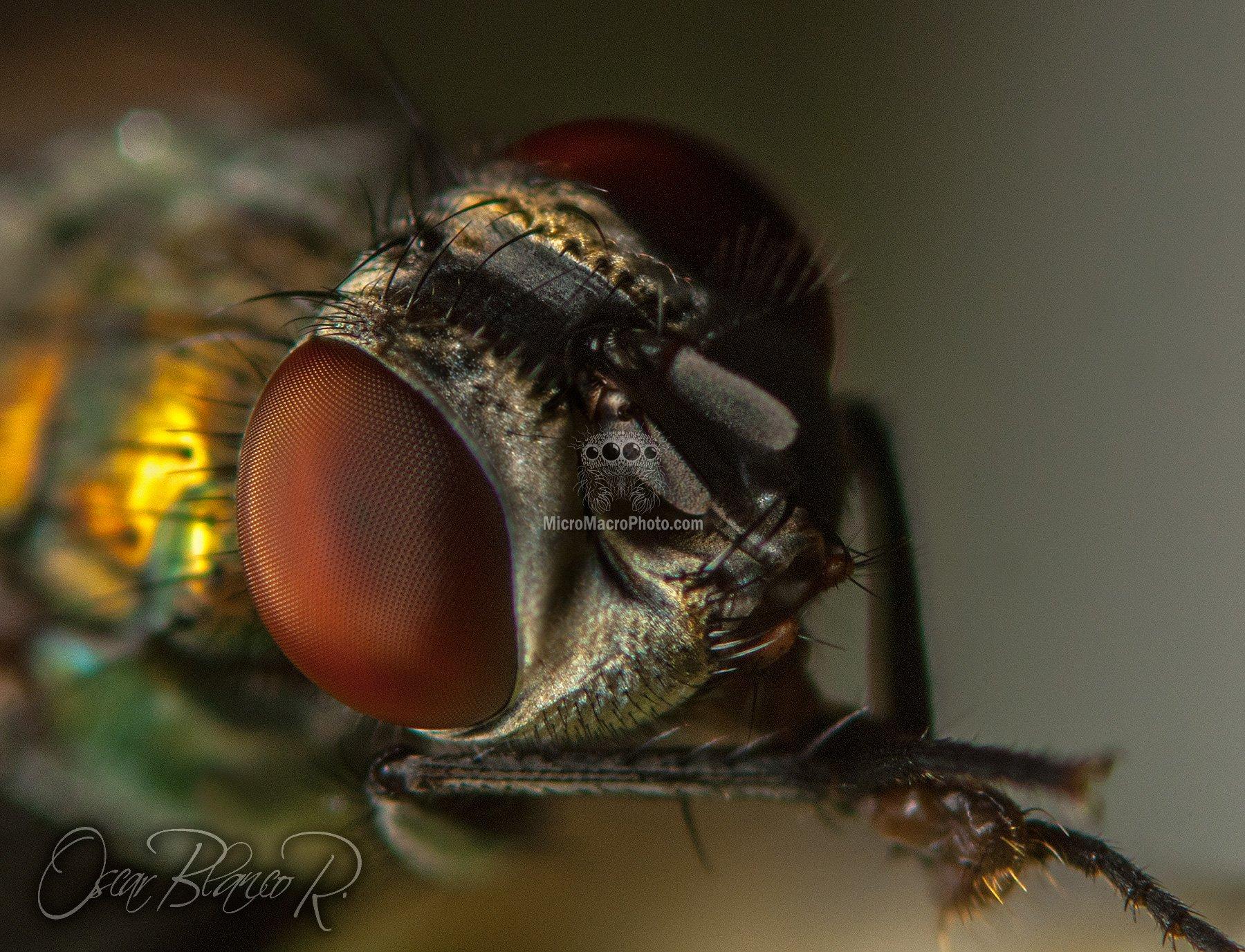 fly002_0