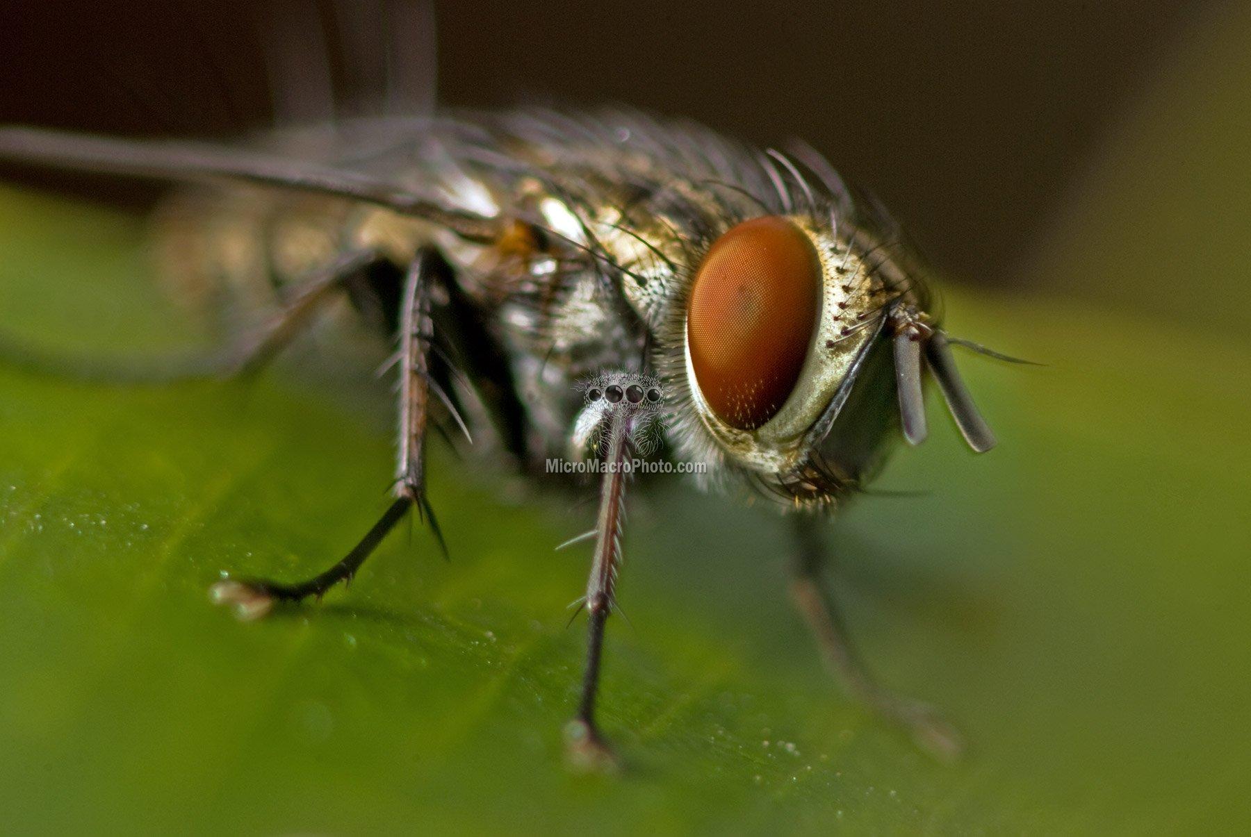 fly0041