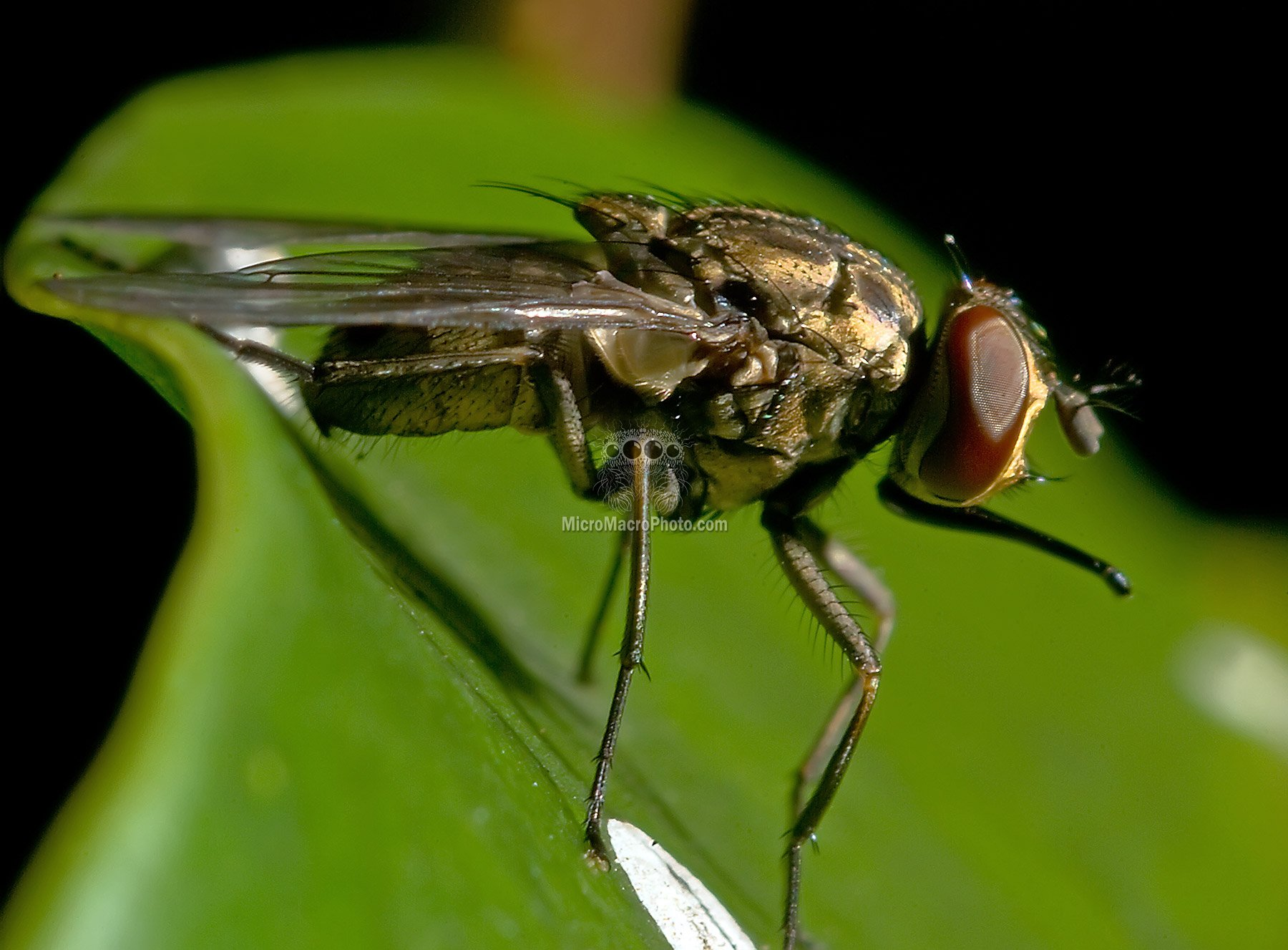 fly007