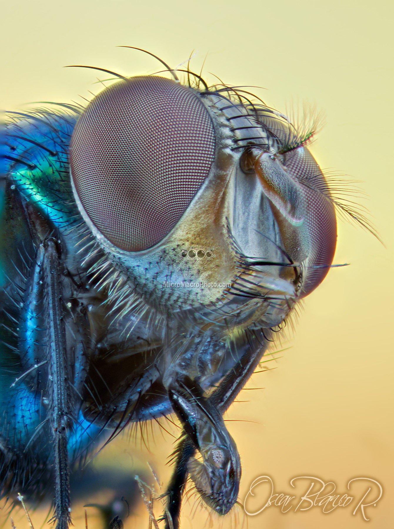 fly020