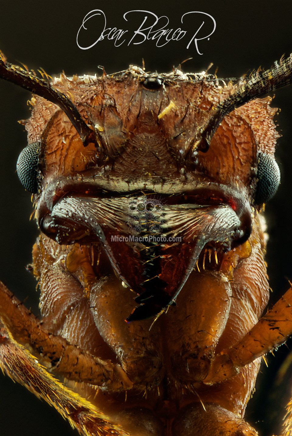 leafcutter-ant-costa-rica